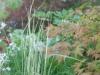 Harmonius planting