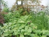 Solomons seal, geraniums and grasses
