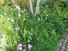 Shade planting