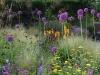 Alliums, Knautia and Grasses
