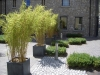 Blocks of Buxus sempervirens 'Suffruticosa' define space
