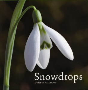Snowdrops - cover